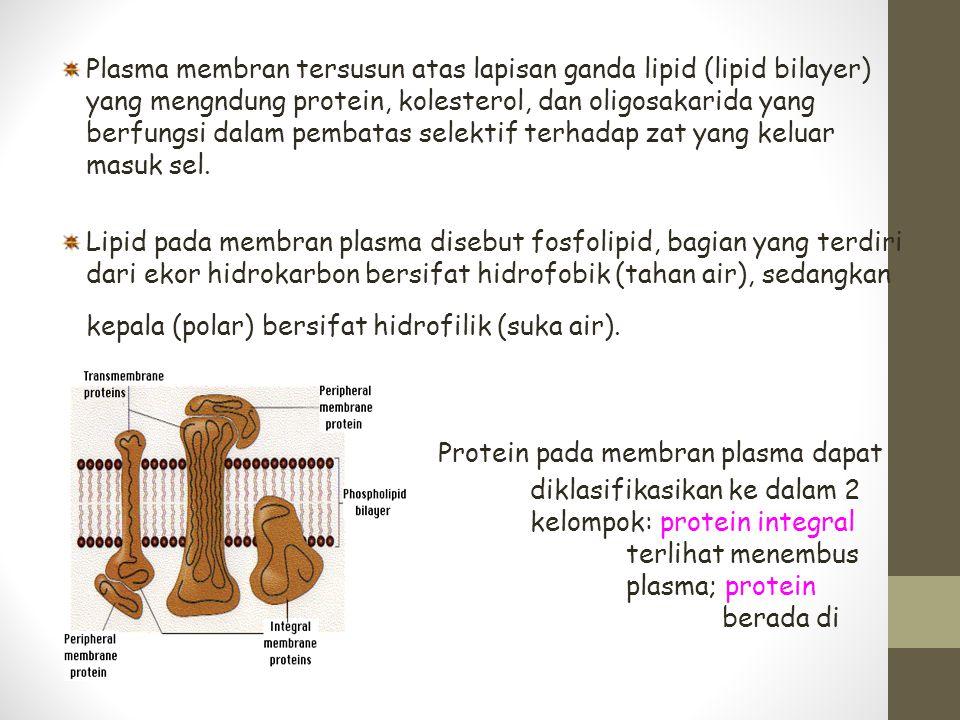 Plasma membran tersusun atas lapisan ganda lipid (lipid bilayer) yang mengndung protein, kolesterol, dan oligosakarida yang berfungsi dalam pembatas s