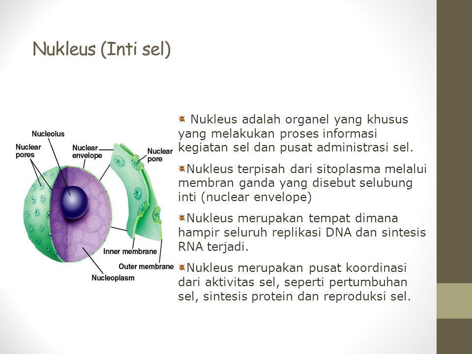 Nukleus (Inti sel) Nukleus adalah organel yang khusus yang melakukan proses informasi kegiatan sel dan pusat administrasi sel. Nukleus terpisah dari s