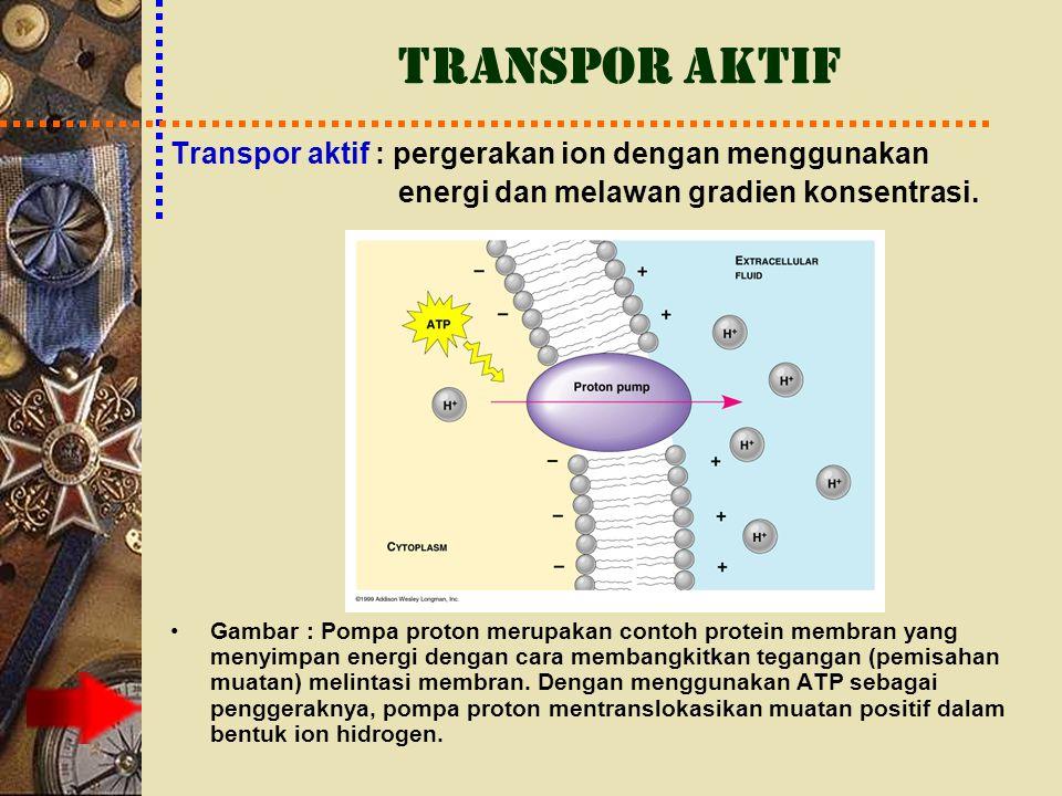 TRANSPOR AKTIF Transpor aktif : pergerakan ion dengan menggunakan energi dan melawan gradien konsentrasi. Gambar : Pompa proton merupakan contoh prote
