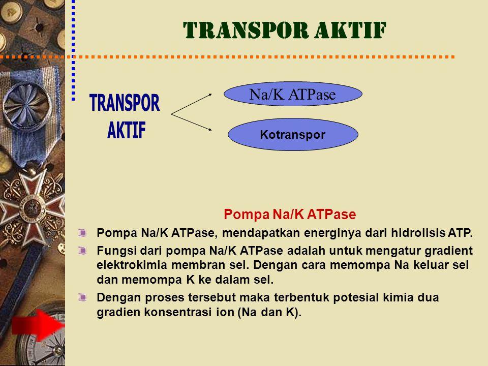 TRANSPOR AKTIF Pompa Na/K ATPase Pompa Na/K ATPase, mendapatkan energinya dari hidrolisis ATP. Fungsi dari pompa Na/K ATPase adalah untuk mengatur gra