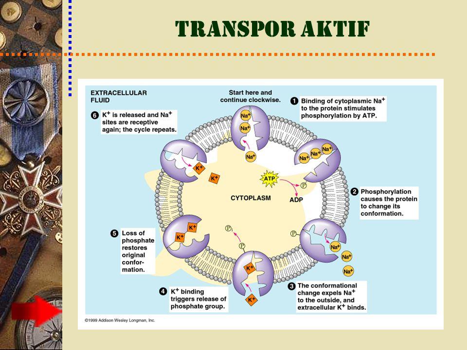 Kotranspor Pompa bertenaga-ATP tunggal yang mentranspor zat terlarut spesifik dan dapat menggerakan transpor aktif beberapa zat terlarut lain secara tidak langsung dalam suatu mekanisme yang disebut kotranspor.