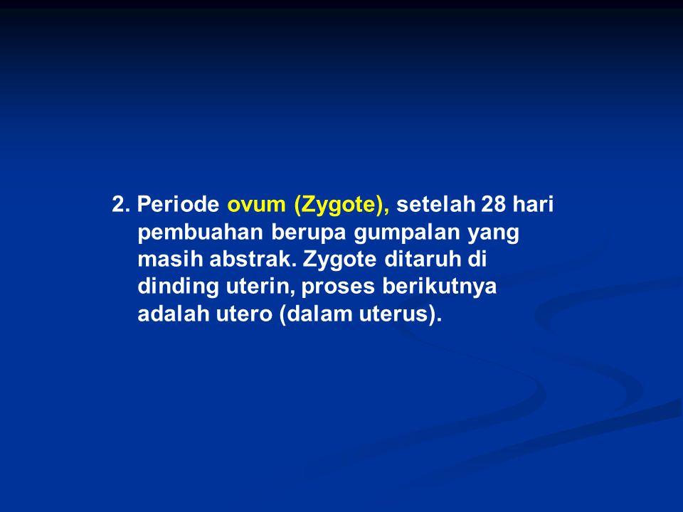 2. Periode ovum (Zygote), setelah 28 hari pembuahan berupa gumpalan yang masih abstrak. Zygote ditaruh di dinding uterin, proses berikutnya adalah ute