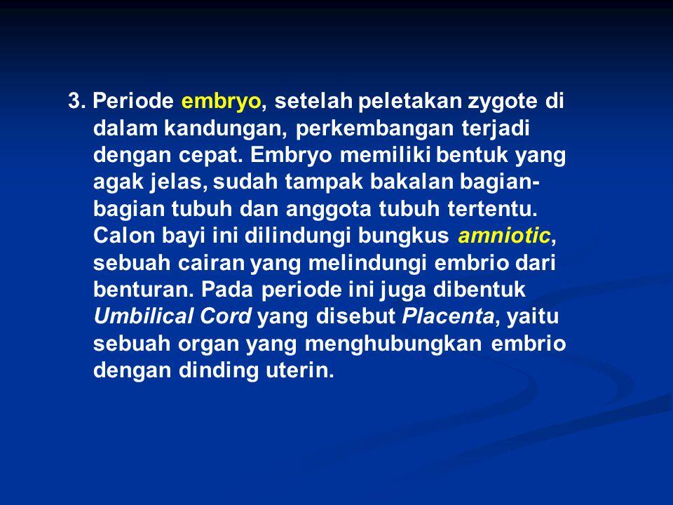 3. Periode embryo, setelah peletakan zygote di dalam kandungan, perkembangan terjadi dengan cepat. Embryo memiliki bentuk yang agak jelas, sudah tampa