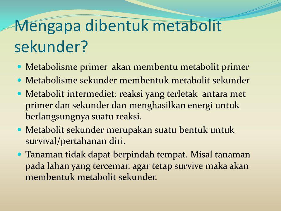 Mengapa dibentuk metabolit sekunder? Metabolisme primer akan membentu metabolit primer Metabolisme sekunder membentuk metabolit sekunder Metabolit int