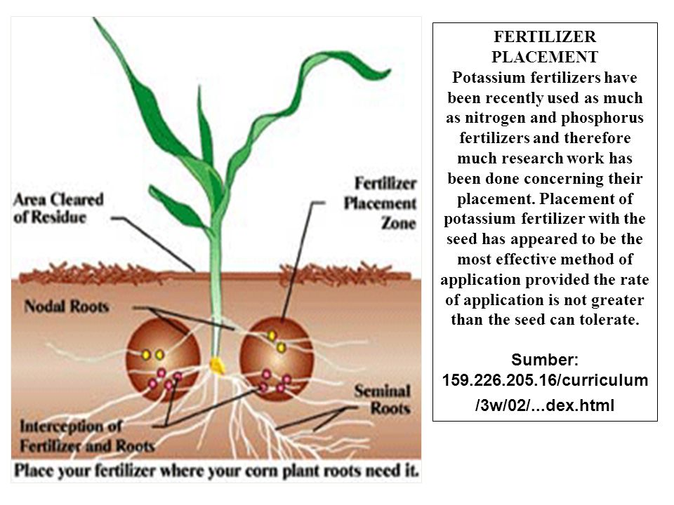 FERTILIZER PLACEMENT Potassium fertilizers have been recently used as much as nitrogen and phosphorus fertilizers and therefore much research work has
