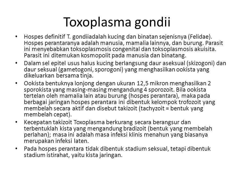 Rute Infeksi 1.