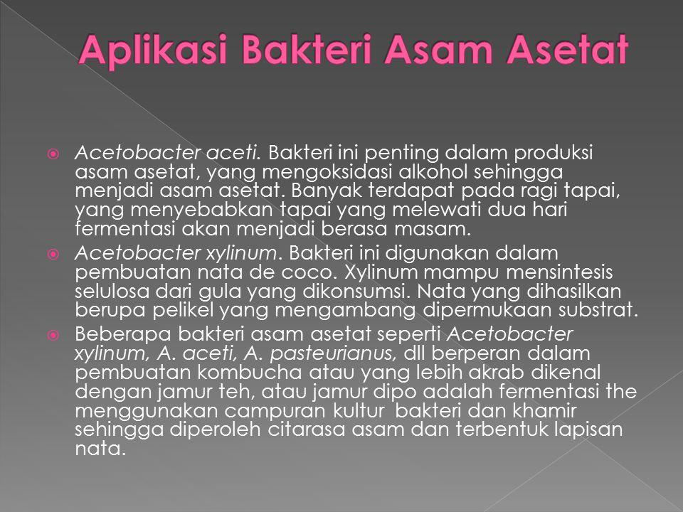  Acetobacter aceti. Bakteri ini penting dalam produksi asam asetat, yang mengoksidasi alkohol sehingga menjadi asam asetat. Banyak terdapat pada ragi