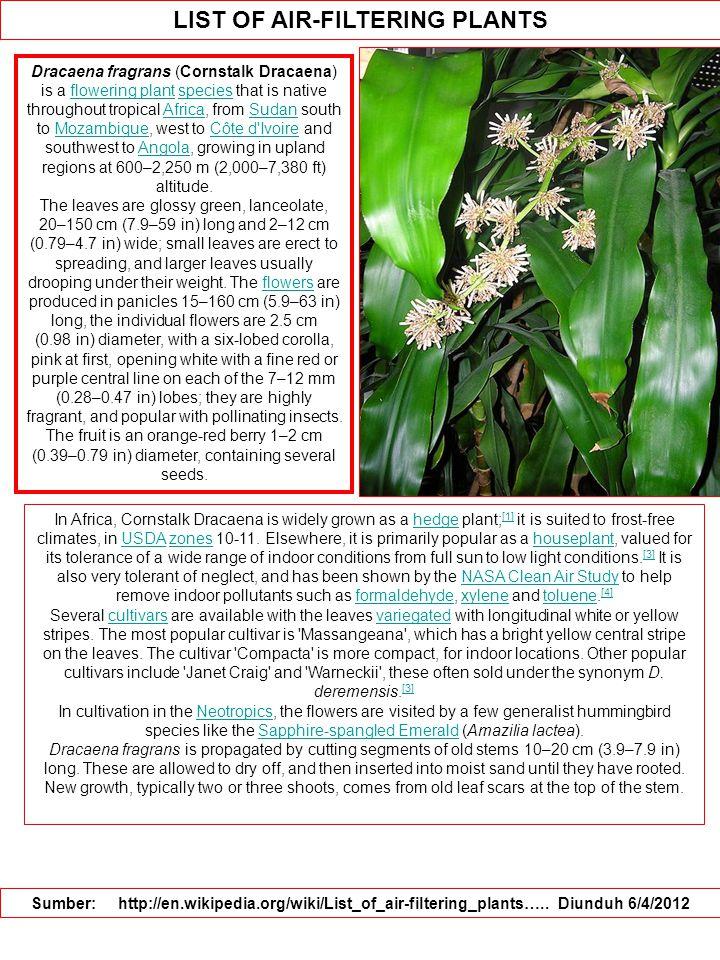 LIST OF AIR-FILTERING PLANTS Sumber: http://en.wikipedia.org/wiki/List_of_air-filtering_plants…..
