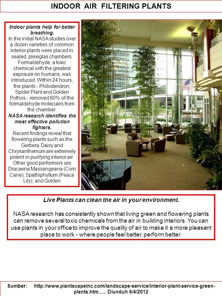 Indoor plants help for better breathing.