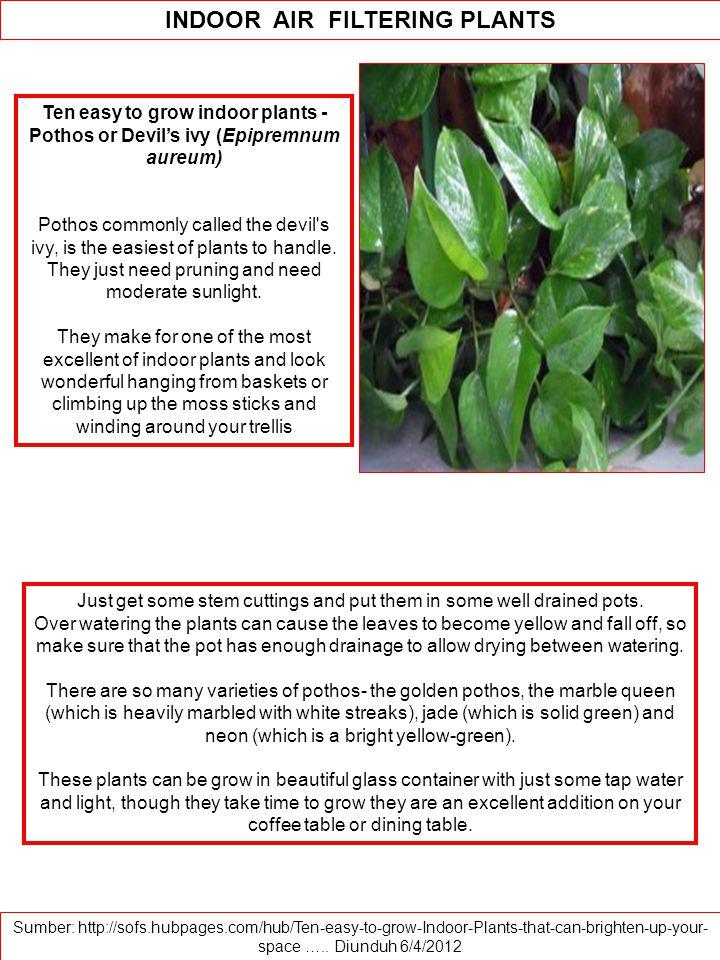 Ten easy to grow indoor plants - Pothos or Devil's ivy (Epipremnum aureum) Pothos commonly called the devil s ivy, is the easiest of plants to handle.