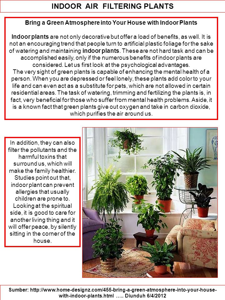 Bring a Green Atmosphere into Your House with Indoor Plants Indoor plants are not only decorative but offer a load of benefits, as well.