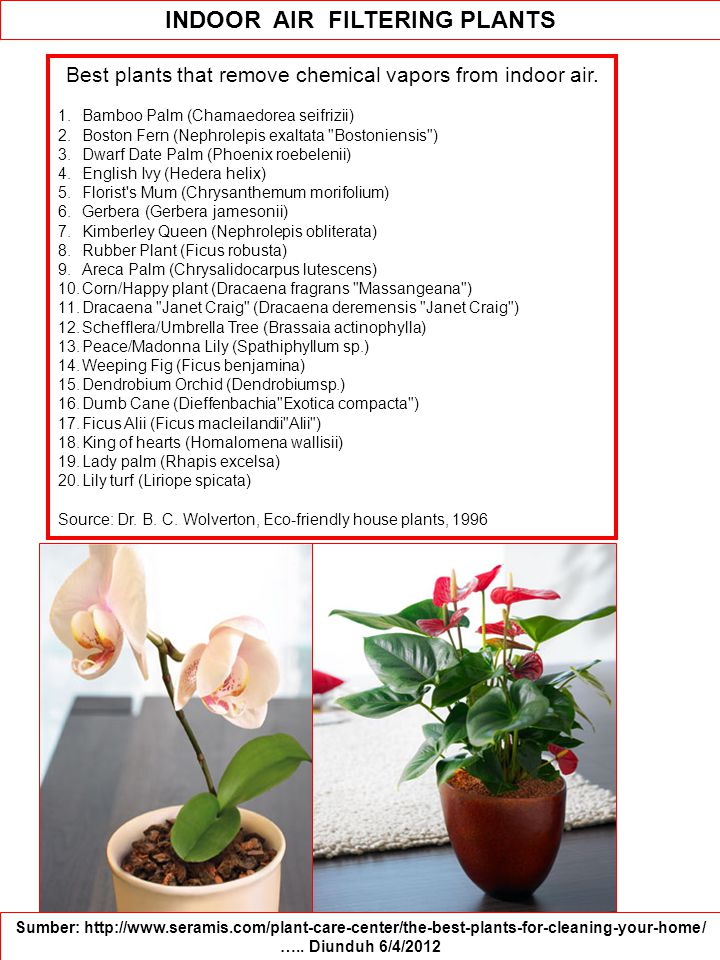 Best plants that remove chemical vapors from indoor air.