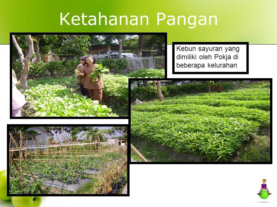 Ketahanan Pangan Kebun sayuran yang dimiliki oleh Pokja di beberapa kelurahan