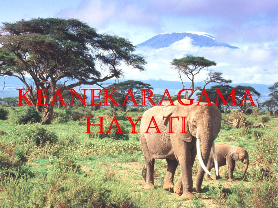 KEANEKARAGAMA HAYATI