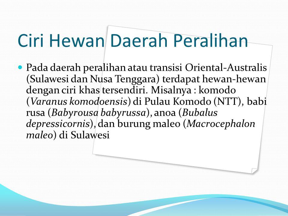 Ciri Hewan Daerah Peralihan Pada daerah peralihan atau transisi Oriental-Australis (Sulawesi dan Nusa Tenggara) terdapat hewan-hewan dengan ciri khas