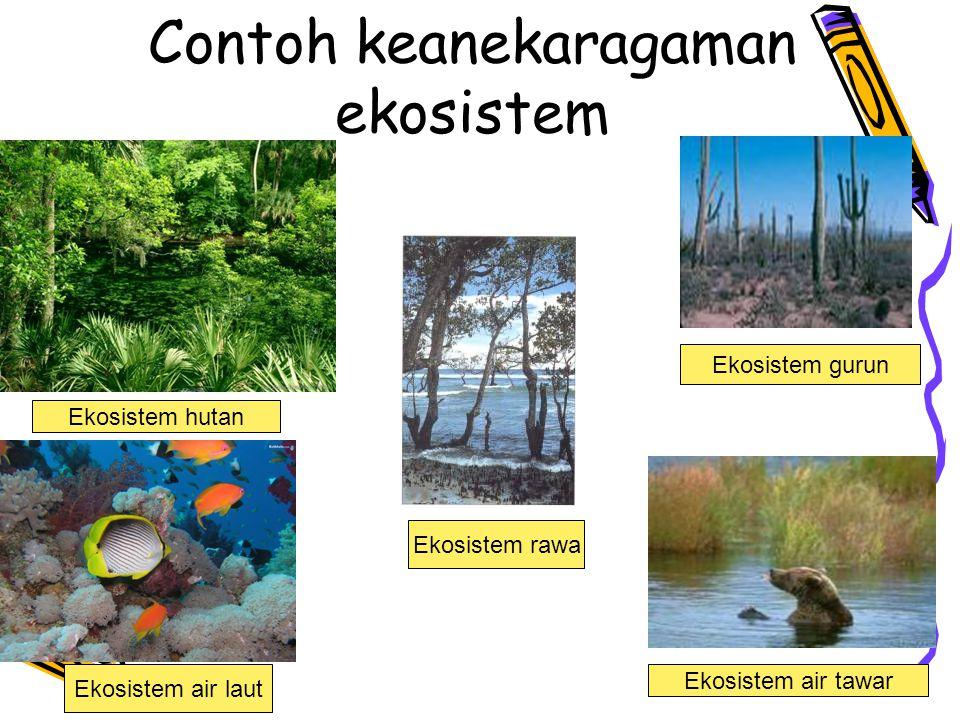 Contoh keanekaragaman ekosistem Ekosistem air laut Ekosistem gurun Ekosistem rawa Ekosistem hutan Ekosistem air tawar