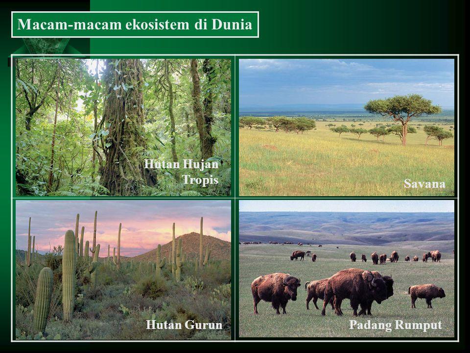 Macam-macam ekosistem di Dunia Hutan Hujan Tropis Savana Hutan GurunPadang Rumput
