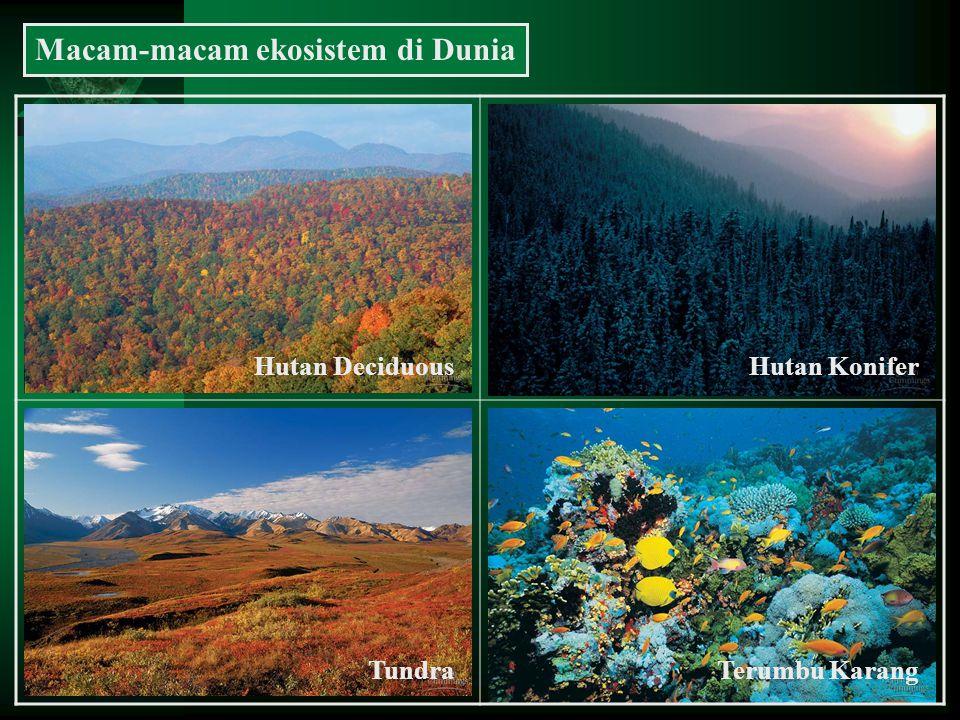 Macam-macam ekosistem di Dunia Hutan DeciduousHutan Konifer TundraTerumbu Karang