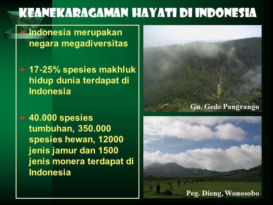 Keanekaragaman hayati di Indonesia  Indonesia merupakan negara megadiversitas  17-25% spesies makhluk hidup dunia terdapat di Indonesia  40.000 spe