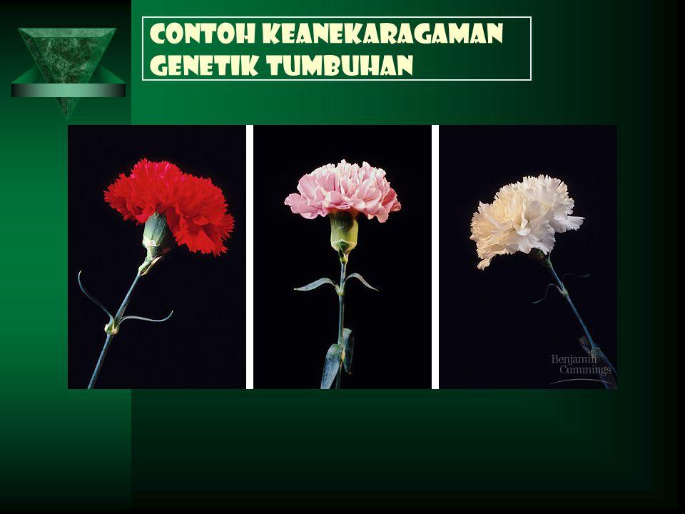 Contoh keanekaragaman genetik tumbuhan