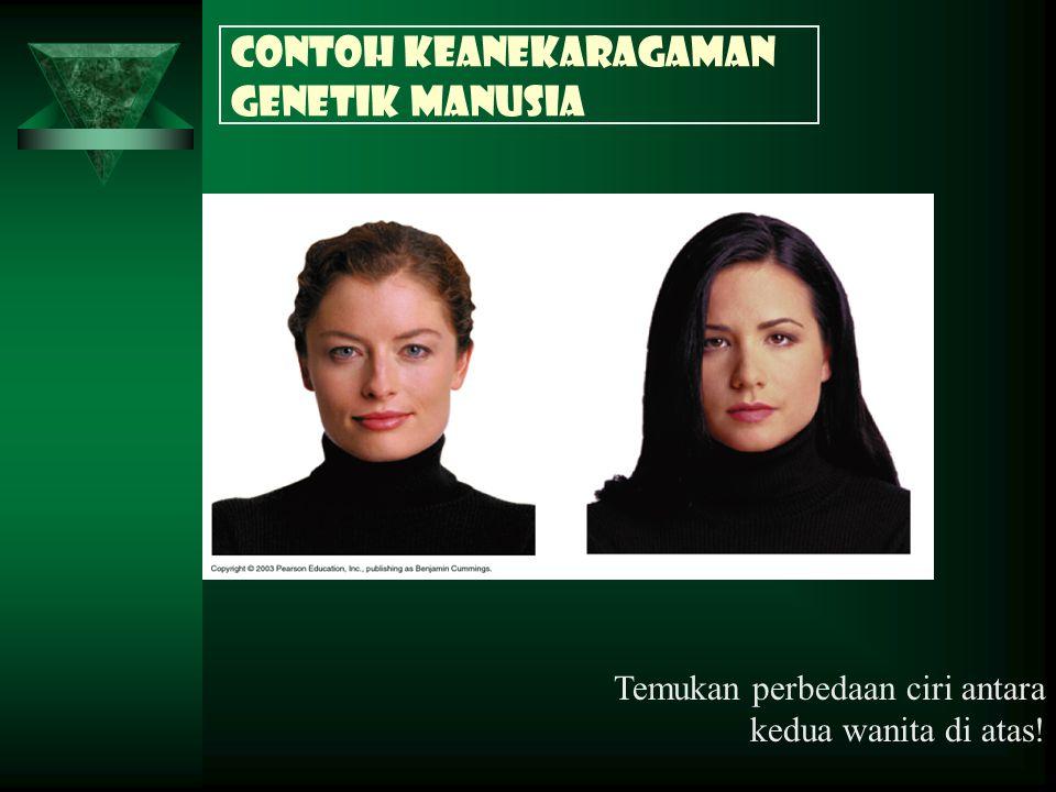 Contoh keanekaragaman genetik Manusia Temukan perbedaan ciri antara kedua wanita di atas!