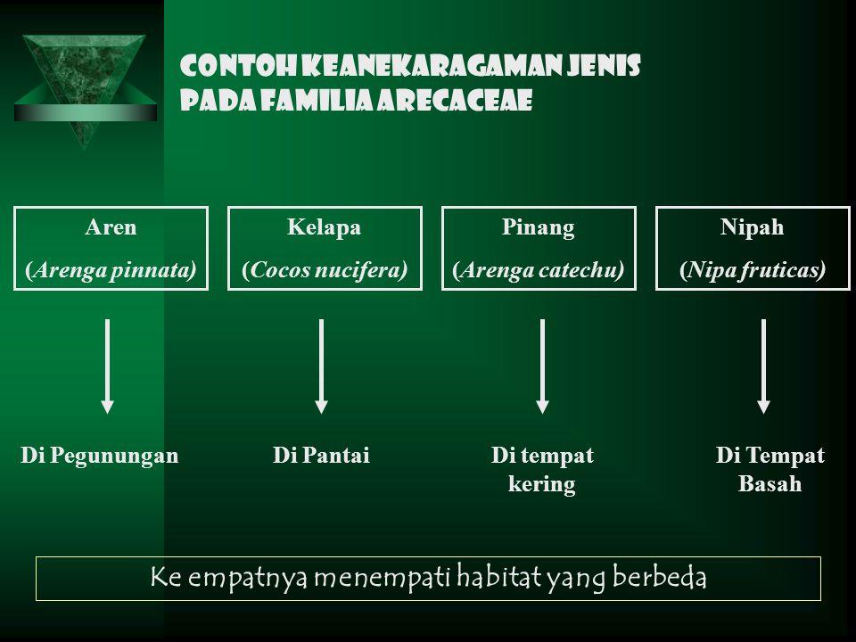 Contoh keanekaragaman jenis pada Familia Arecaceae Aren (Arenga pinnata) Kelapa (Cocos nucifera) Pinang (Arenga catechu) Nipah (Nipa fruticas) Di Pegu