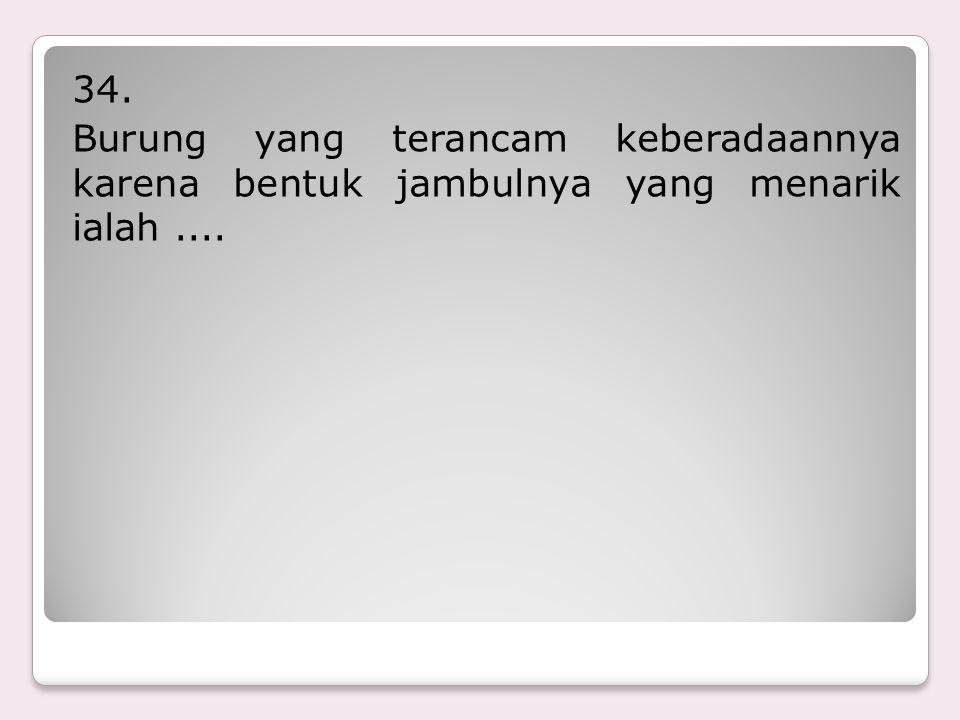 33. Jenis hewan langka yang merupakan jenis harimau terakhir di Indonesia....