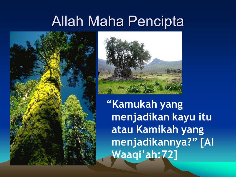 Kamukah yang menjadikan kayu itu atau Kamikah yang menjadikannya? [Al Waaqi'ah:72]
