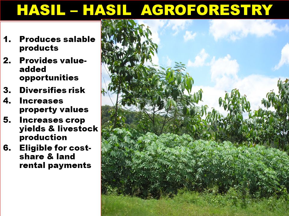 HASIL – HASIL AGROFORESTRY 1.Produces salable products 2.Provides value- added opportunities 3.Diversifies risk 4.Increases property values 5.Increase