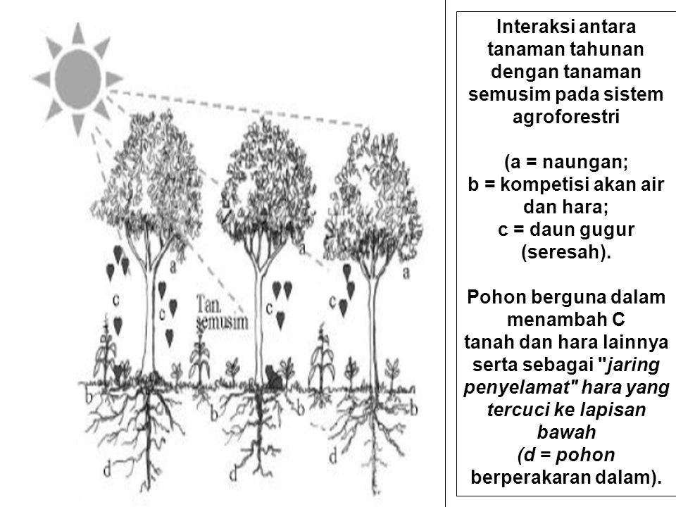 Interaksi antara tanaman tahunan dengan tanaman semusim pada sistem agroforestri (a = naungan; b = kompetisi akan air dan hara; c = daun gugur (seresah).