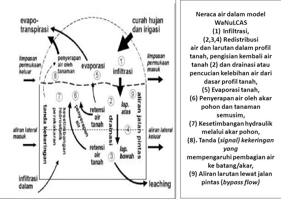 Neraca air dalam model WaNuLCAS (1)Infiltrasi, (2,3,4) Redistribusi air dan larutan dalam profil tanah, pengisian kembali air tanah (2) dan drainasi atau pencucian kelebihan air dari dasar profil tanah, (5) Evaporasi tanah, (6) Penyerapan air oleh akar pohon dan tanaman semusim, (7) Kesetimbangan hydraulik melalui akar pohon, (8).