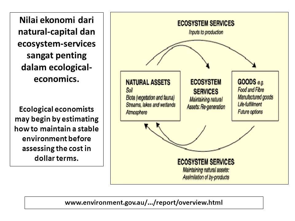 Nilai ekonomi dari natural-capital dan ecosystem-services sangat penting dalam ecological- economics. Ecological economists may begin by estimating ho