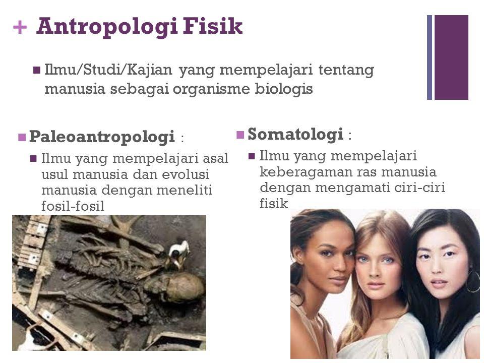 + Cabang Antropologi ANTROPOLOGI ANTROPOLOGI FISIK Paleoantropologi Somatologi ANTROPOLOGI BUDAYA Prehistori Etnolinguistik Etnologi Etnopsikologi