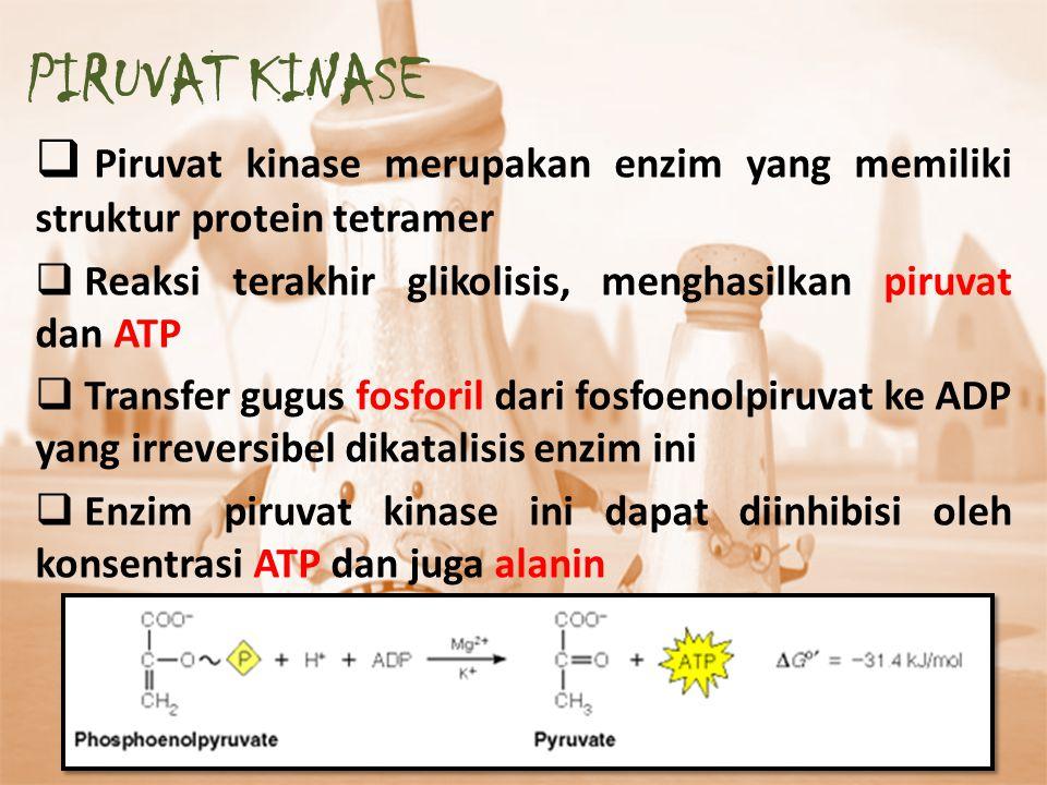  Piruvat kinase merupakan enzim yang memiliki struktur protein tetramer  Reaksi terakhir glikolisis, menghasilkan piruvat dan ATP  Transfer gugus f