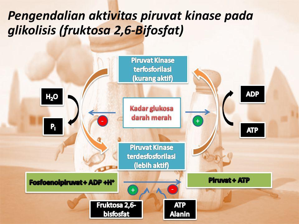 -+ + - Pengendalian aktivitas piruvat kinase pada glikolisis (fruktosa 2,6-Bifosfat)