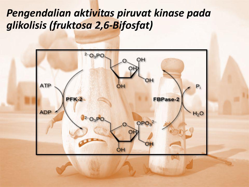  Fruktosa 2,6 bisfosfat dibentuk melalui fosforilasi senyawa fruktosa 6-fosfat oleh enzim fosfofruktokinase-2  Jika glukosa yang berlimpah, konsentrasi senyawa fruktosa 2,6-bisfosfat akan meningkat sehingga merangsang glikolisis dengan mengaktifkan fosfofruktokinase-1 dan menghambat fruktosa-1,6- bisfosfatase  Jika kekurangan glukosa, terjadi penurunan konsentrasi fruktosa 2,6-bisfosfat, kemudian menghilangkan aktivitas fosfofruktokinase-1 dan tidak ada penghambatan kerja fruktosa-1, 6-bisfosfatase