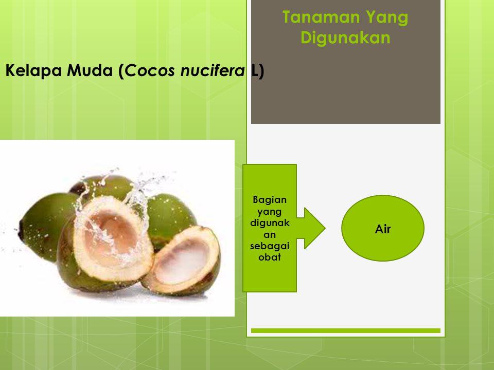 Tanaman Yang Digunakan Kelapa Muda ( Cocos nucifera L) Bagian yang digunak an sebagai obat Air