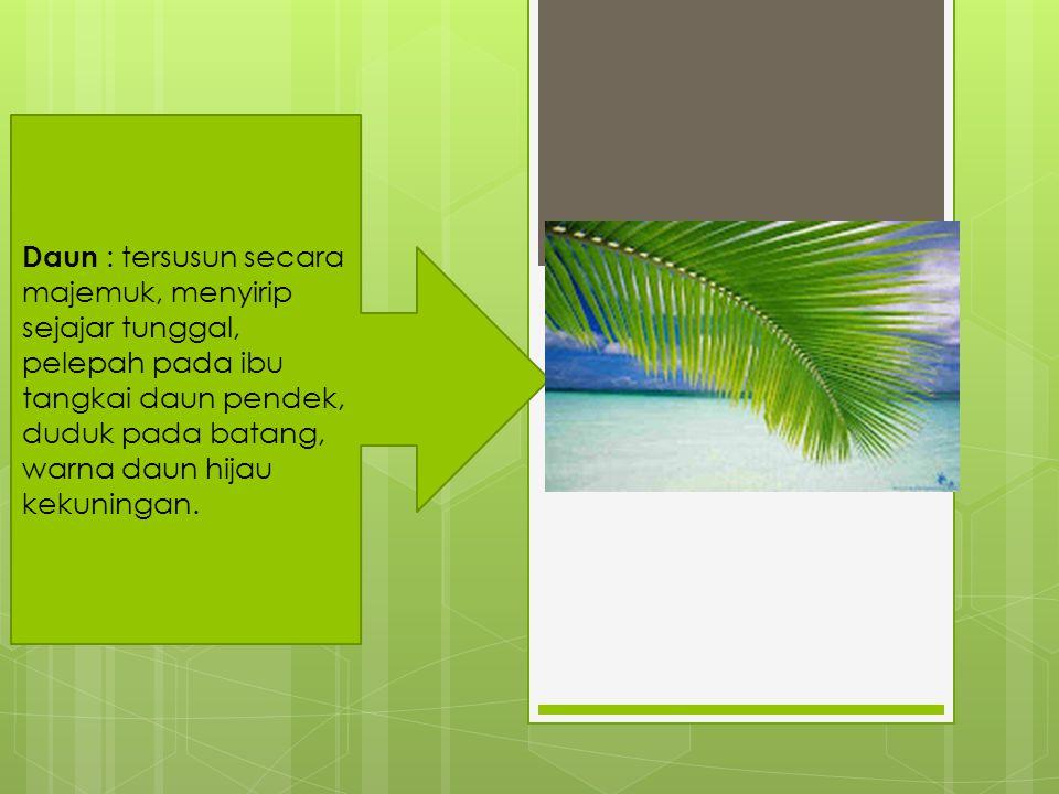 Buah : diameter 10 cm sampai 20 cm atau bahkan lebih, berwarna kuning, hijau, atau coklat; buah tersusun darimesokarp berupa serat yang berlignin, disebut sabut, melindungi bagianendokarp yang keras (disebut batok) dan kedap air; endokarp melindungi biji yang hanya dilindungi oleh membran yang melekat pada sisi dalam endokarp.