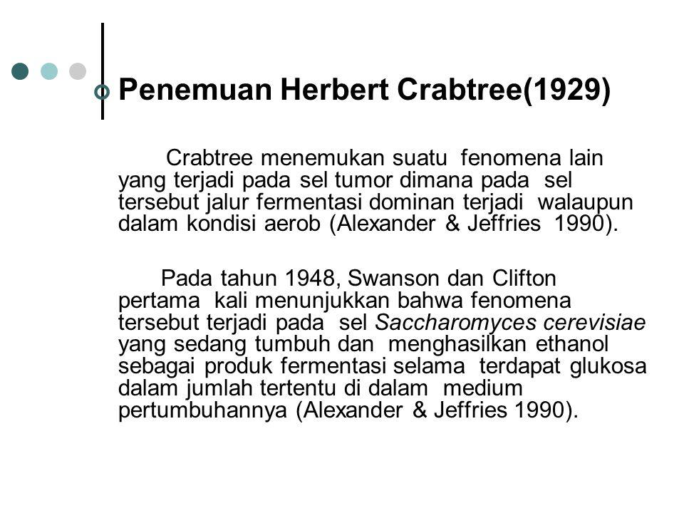 Penemuan Herbert Crabtree(1929) Crabtree menemukan suatu fenomena lain yang terjadi pada sel tumor dimana pada sel tersebut jalur fermentasi dominan t