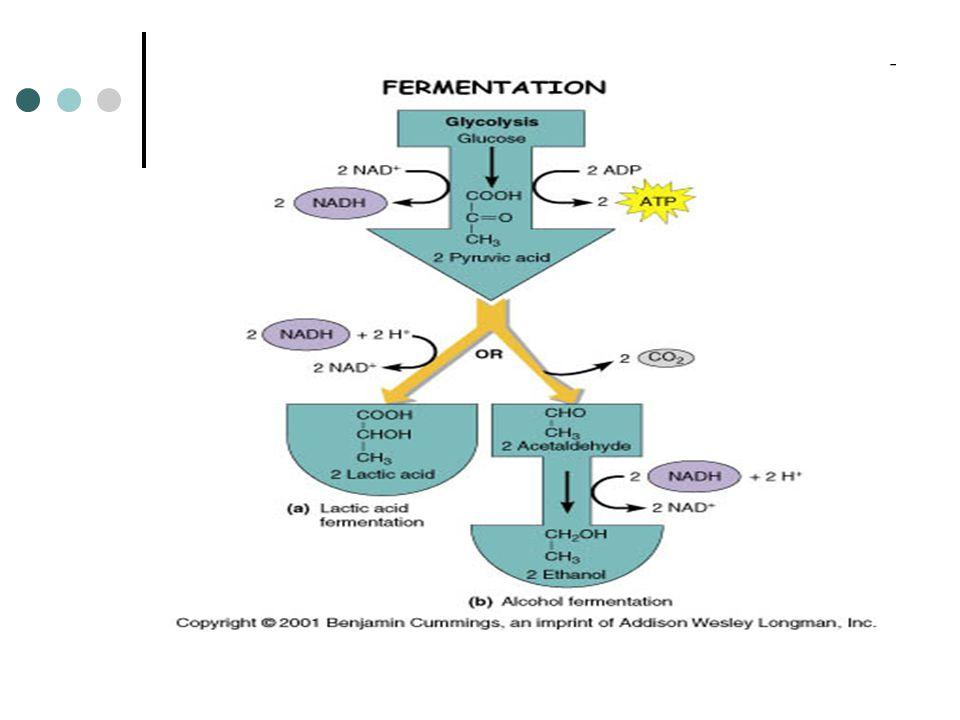 de Dekken (1966) Crabtree effect tidak terjadi pada semua khamir, namun hanya pada beberapa species saja, antara lain : Saccahromyces cerevisiae, S.