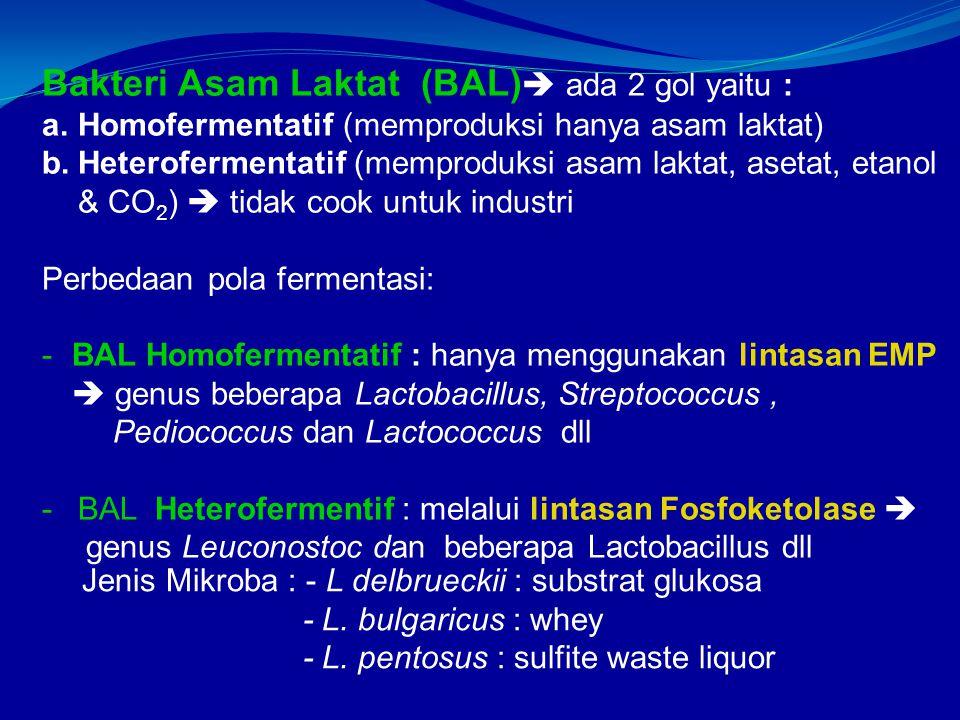 Bakteri Asam Laktat (BAL)  ada 2 gol yaitu : a.Homofermentatif (memproduksi hanya asam laktat) b.Heterofermentatif (memproduksi asam laktat, asetat, etanol & CO 2 )  tidak cook untuk industri Perbedaan pola fermentasi: -BAL Homofermentatif : hanya menggunakan lintasan EMP  genus beberapa Lactobacillus, Streptococcus, Pediococcus dan Lactococcus dll -BAL Heterofermentif : melalui lintasan Fosfoketolase  genus Leuconostoc dan beberapa Lactobacillus dll Jenis Mikroba : - L delbrueckii : substrat glukosa - L.