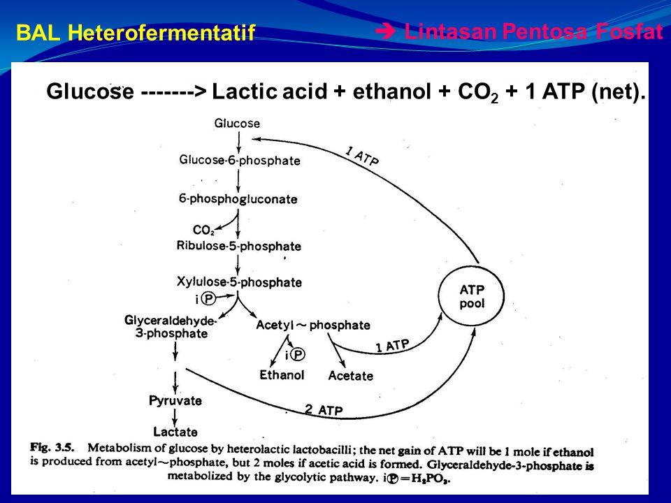 BAL Heterofermentatif Glucose -------> Lactic acid + ethanol + CO 2 + 1 ATP (net).
