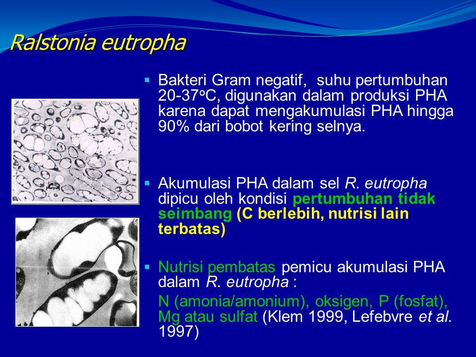 Ralstonia eutropha  Bakteri Gram negatif, suhu pertumbuhan 20-37 o C, digunakan dalam produksi PHA karena dapat mengakumulasi PHA hingga 90% dari bob