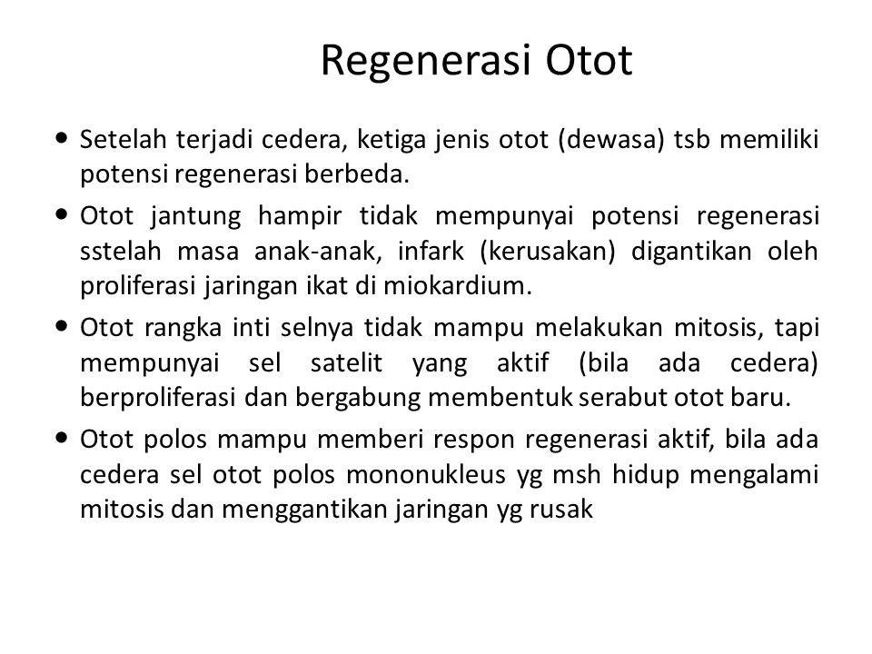Regenerasi Otot Setelah terjadi cedera, ketiga jenis otot (dewasa) tsb memiliki potensi regenerasi berbeda. Otot jantung hampir tidak mempunyai potens