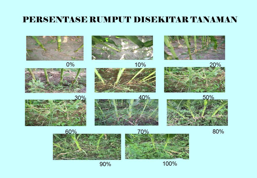 PERSENTASE RUMPUT DISEKITAR TANAMAN 100% 0% 10%20% 30% 40%50% 60%70% 80% 90%