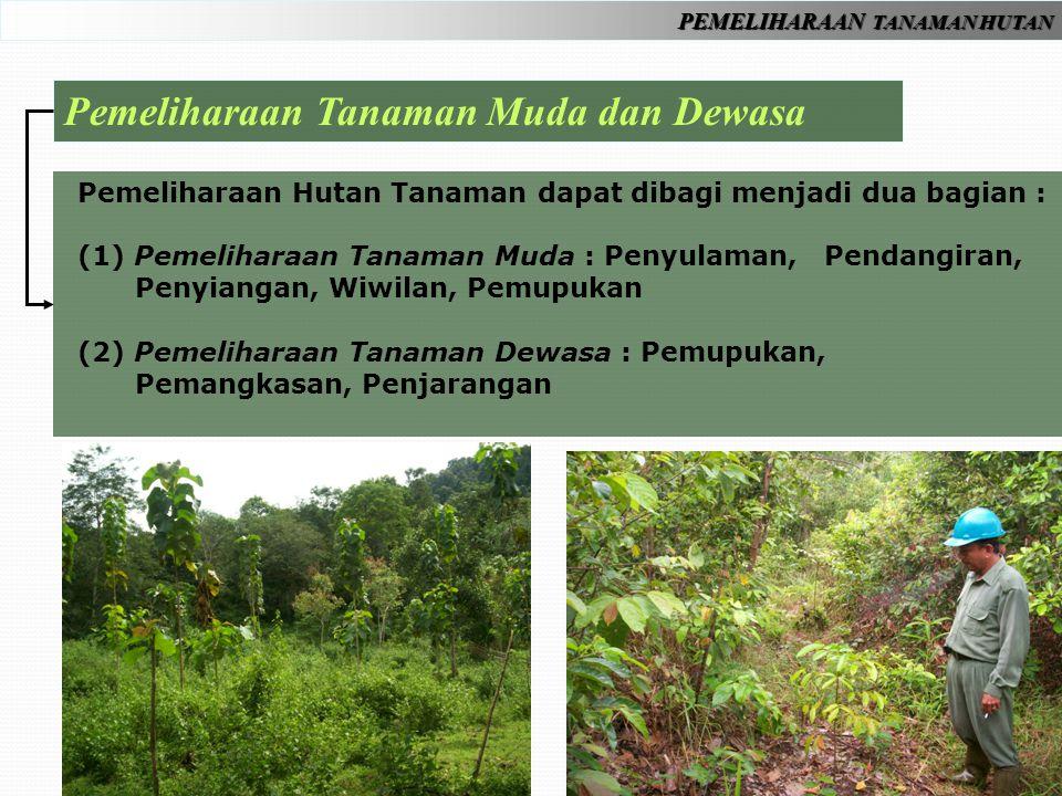 PEMELIHARAAN TANAMAN HUTAN Pemeliharaan Tanaman Muda dan Dewasa Pemeliharaan Hutan Tanaman dapat dibagi menjadi dua bagian : (1) Pemeliharaan Tanaman Muda : Penyulaman, Pendangiran, Penyiangan, Wiwilan, Pemupukan (2) Pemeliharaan Tanaman Dewasa : Pemupukan, Pemangkasan, Penjarangan
