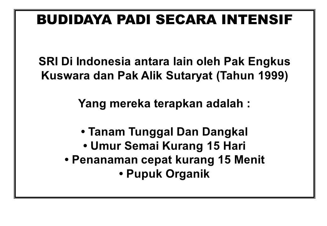 SRI Di Indonesia antara lain oleh Pak Engkus Kuswara dan Pak Alik Sutaryat (Tahun 1999) Yang mereka terapkan adalah : Tanam Tunggal Dan Dangkal Umur S