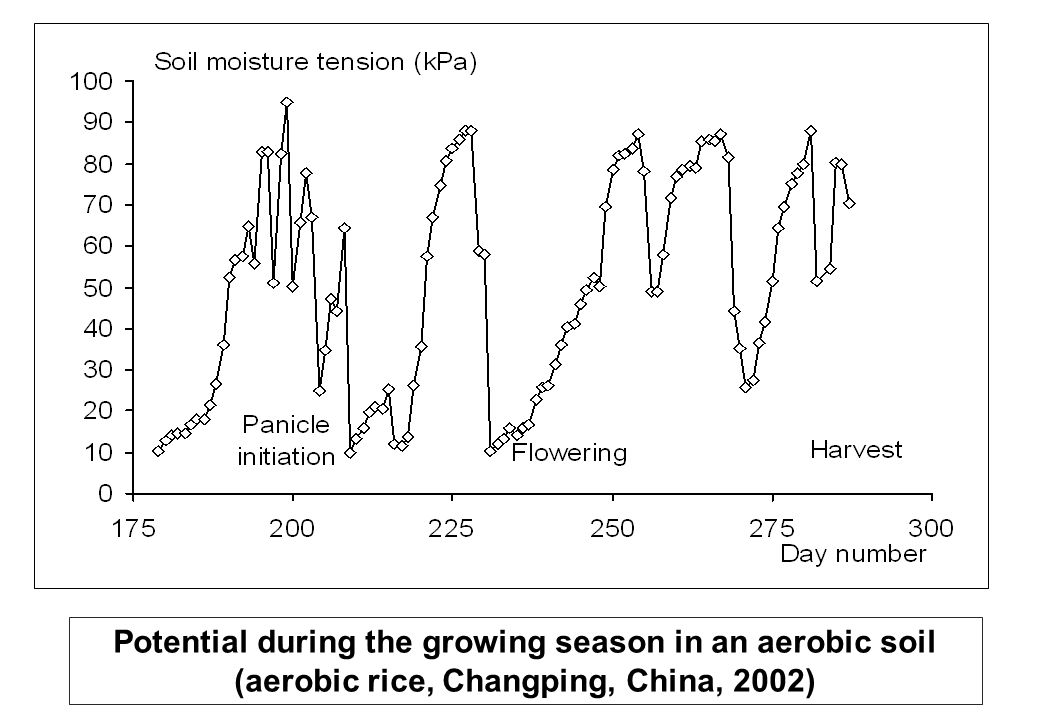 Potential during the growing season in an aerobic soil (aerobic rice, Changping, China, 2002)