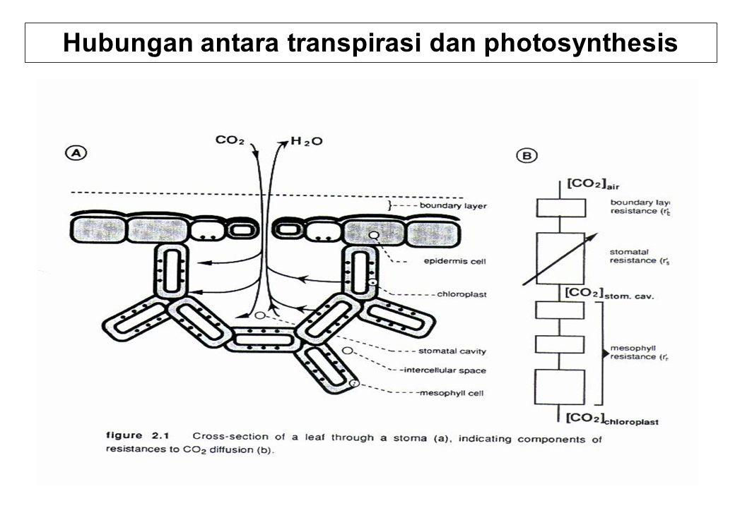 Hubungan antara transpirasi dan photosynthesis