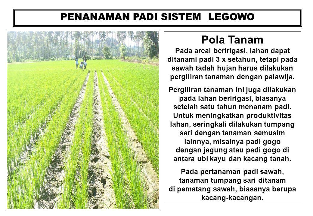 PENANAMAN PADI SISTEM LEGOWO Pola Tanam Pada areal beririgasi, lahan dapat ditanami padi 3 x setahun, tetapi pada sawah tadah hujan harus dilakukan pe